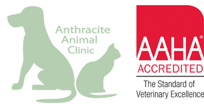 Veterinarian Near Me - Contact Us | Anthracite Animal Clinic